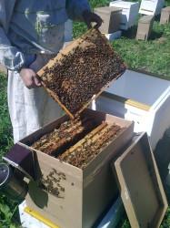 переселение пчелосемьи