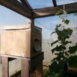 пчёлы в картонном улье опыляют теплицы