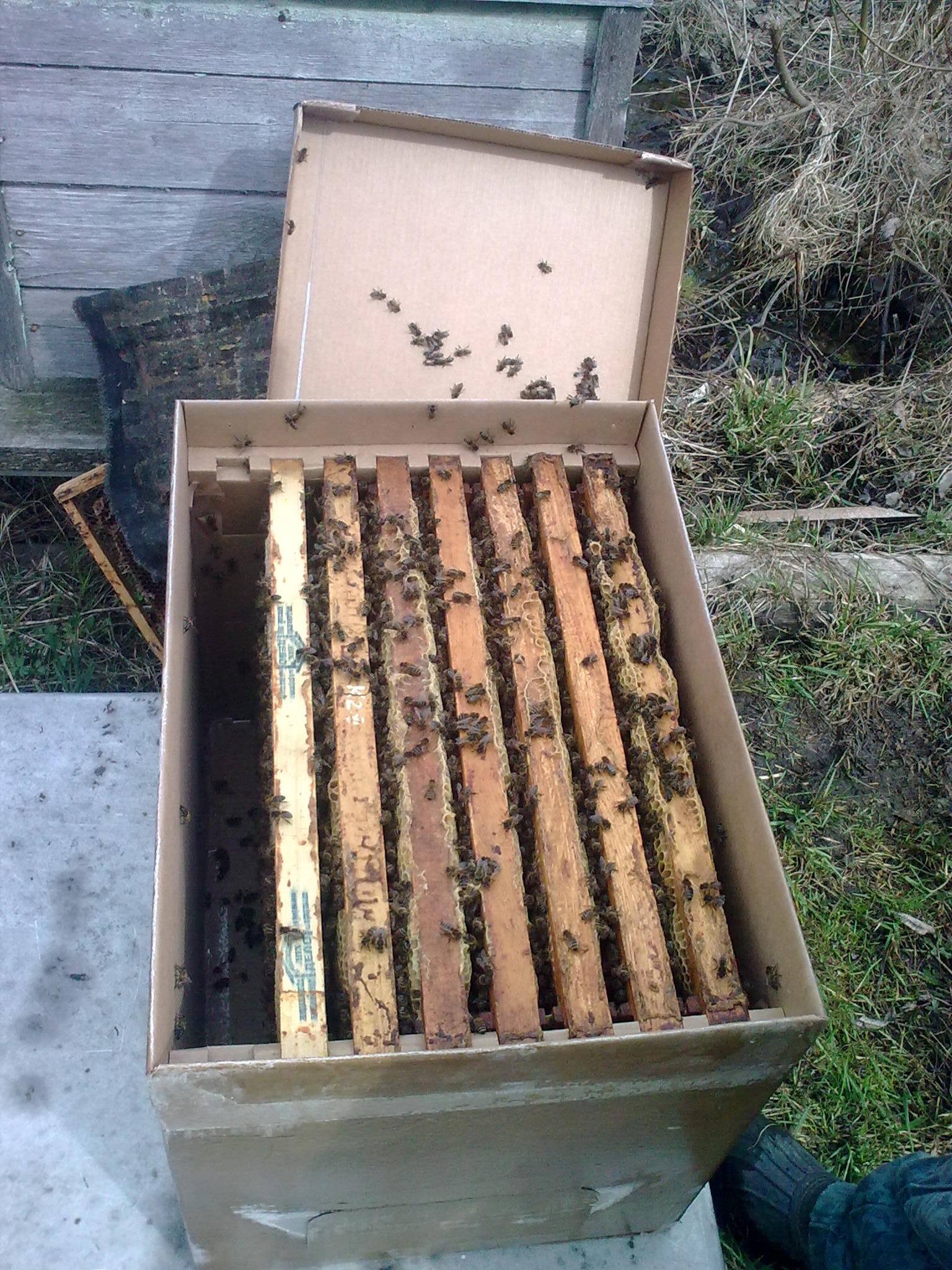 пчелопакет на 7 рамках