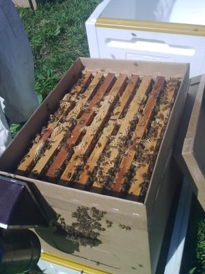 пчёлы дёшево