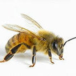 наши пчёлки на Youtube