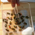 лечение пчёлами в Санкт-Петербурге