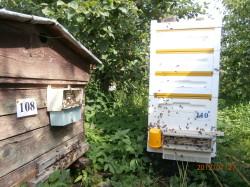 """традиционный улей-""""Домик"""" и Bee Box"""