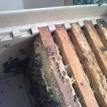 пакеты для пчел купить, пчелопакеты