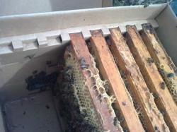 пакет для перевозки и временного содержания пчёл УлеёК