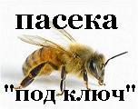 Сайт для тех, кто решил завести пчёл