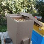 пакет для пчёл