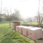 пчёл можно держать и в картонных ульях