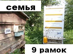 пчелосемья девять улочек