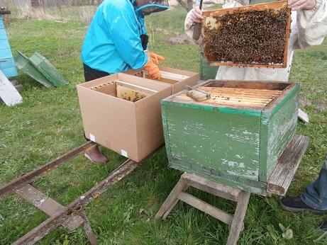 пчёлы на высадку