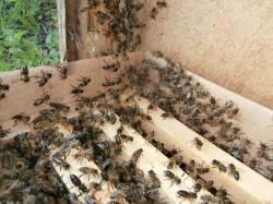 пчёлки в новом жилище
