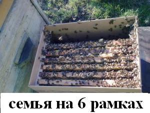 пчелосемьи Лен. область