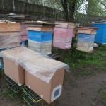 картонные пакеты под апрельским дождём