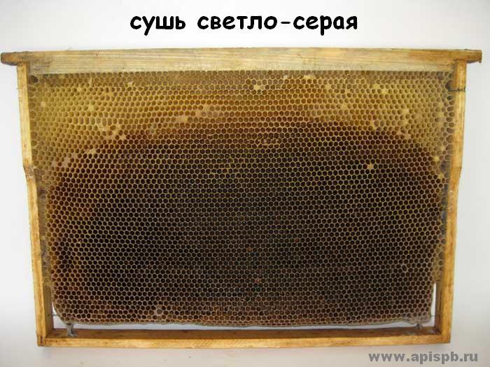соты пчелиные - основа гнезда