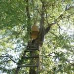ловушка для роя на дереве