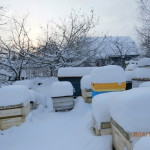 Pod-snegom