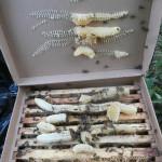 пчёлы в коробке