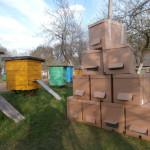 семьи пчёл в пакетах